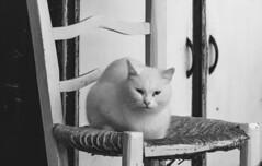 Spain - Granada - Monachil - Merendero el Puntarron (Marcial Bernabeu) Tags: marcial bernabeu bernabu spain espaa andaluca andalucia andalusia granada monachil cat gato silla chair merenderoelpuntarron elpuntarrn