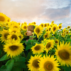amongst the flowers (afisher photography) Tags: sunset portrait selfportrait girl photoshop outdoors alone farm sunflowers sunflowerfield photoshopcomposite conceptualportrait amandaj amandafisher fairytalephotography amandajphotography afisherphotography