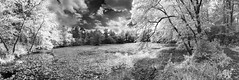 patuxent pond panoramic (Renee Aleshire) Tags: trees bw nature water pond panoramic patuxent