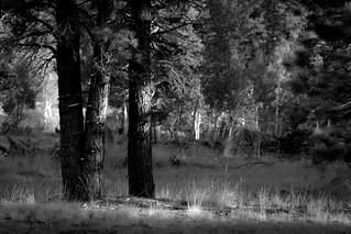 Dixie Forest National Park (Utah)