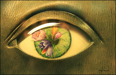 Eye book cover (berylquayle) Tags: flowers light reflection eye glass leaves leather liverpool book purple library central crocus cover bulbs