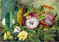 Anglų lietuvių žodynas. Žodis seed-vessel reiškia n bot. dėžutė (vaisius); apyvaisis lietuviškai.