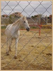 Equino tras reja. (margabel2010) Tags: blanco animal metal caballo rojo ventanas amarillo patas animales vistas casas corral granja heno redil barandilla rejas airelibre equino mamferos pajas crines cuadrpedos pezuas