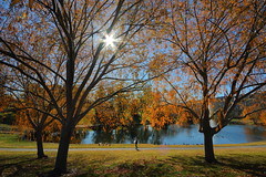 Last Glimpse Of Fall (tourtrophy) Tags: park pond fallcolors willow pleasanton willowtrees canonefs1022mmf3545usm thermofisher canoneos7dmark2