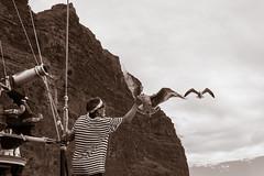Tenerife Octubre 2015 (A.J. Paredes) Tags: trip viaje sky people bw espaa naturaleza man color bird blancoynegro nature canon eos islands boat photo blackwhite spain barco ship seagull canarias bn cielo tenerife canary gaviota islas paredes pirata 700d ajota85 ajparedes