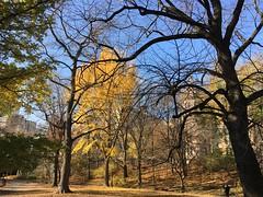 Central Park NYC, iPhone 6S Plus (Ramon Vera) Tags: nyc autumn trees centralpark iphone6splus