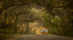 Greatest Place to Run! (JDS Fine Art & Fashion Photography) Tags: trees running runners femalerunners girlsrunningteam girlscrosscountry cross country runningteam training fitness sunrise landscape nature naturesbeauty