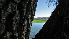 Cornice di un dipinto (PennadiFata.it) Tags: sky green albero pianta paesaggio sfondo