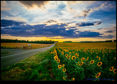 160805-0281-XM1.jpg (hopeless128) Tags: sunflowers france sky eurotrip 2016 fields clouds bioussac aquitainelimousinpoitoucharen aquitainelimousinpoitoucharentes fr explored