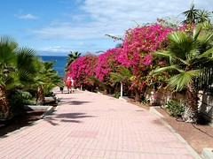 Geranium Walk Tenerife. (Flyingpast) Tags: wb2000 tl350 tenerife canaryislands holiday vacation sunny wintersun lasamericas travel tourism path geraniumwalk spain flowers autumn