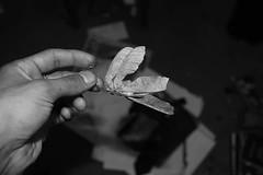 Tree Stuff~ 10/17/2016 #day294 #day294of365 #365dayproject #pictureoftheday #everydaystuff #pnw #Eugene #oregon #128 (Yusuf Ali Muhammad) Tags: everydaystuff oregon 128 pnw pictureoftheday eugene day294of365 day294 365dayproject