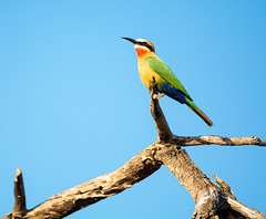 frica (Juan Di Lullo) Tags: 2015 africa ave kruger naturaleza sudafrica viaje