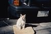 img733 (Lonly Goat) Tags: asakusa 浅草 ネコ 猫 contaxt2 kodachrome200 路地 裏路地