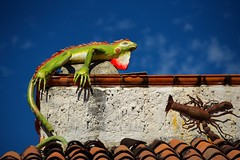"""Day of the Iguana"" (tvdflickr) Tags: puertovallarta mexico puertovallartamexico iguana lobster art colorful building decorations photo by tom driggersa copyright photobytomdriggers thomas driggers photography thomasdriggersphotography"