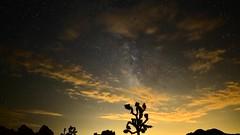 Joshua Tree at Night Again (PVA_1964) Tags: nikon d5 joshuatree joshuatreenationalpark nationalparkatnight california nightsky milkyway timelapse incameratimelapse longexposure movingsky stars lightpollution afs20mmƒ18