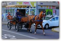 Caballo Santa Catalina (LUIS J. PERERA) Tags: las palmas de gran canaria santa catalina coche caballos luisperera sonya6000