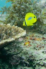 20161010-DSC_9529.jpg (d3_plus) Tags:  southizu 1nikkor185mmf18 fish marinesports apnea zoomlense sea j4 underwater nikon1  skindiving watersports sky  japan  50mmf18 50mm nikonwpn3 185mm   185mmf18 nikkor   nikon1j4  nikon  snorkeling wpn3 port scenery diving   1  drive   waterproofcase  izu