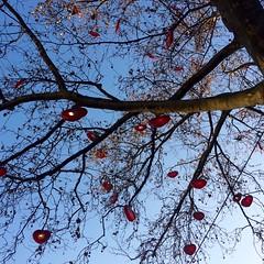 Hartenboom / Keulen (rob4xs) Tags: keulen kln klle cologne duitsland deutschland germany iphonephoto hart herz heart boom baum tree