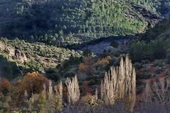 Nacimiento Rio Mundo JAL0029 (dedaimiel) Tags: riomundo naturaleza paisaje landscape nature jalriomundo