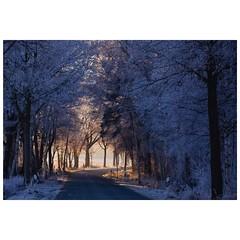 Morgensonne (Nikonfotografie) Tags: nikonofficials nikonlove nikon lichterglanz lichtundschatten glitzer eisig morgenstimmung morgensonne naturephotography naturfotografie natur colorphotography fineartphotography niedersachsen meinnorden winterlandschaften frostig winter