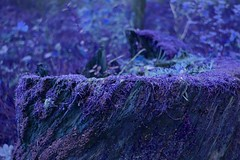 Unearthly (ART.VMT) Tags: experiment blue hue color purple surreal frozen strange alien unearthly stub stump jurmala lielupe bulduri cold