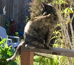 Hazel Backlit (Room With A View) Tags: cat hazel