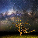 Milky Way and a Gnarly Tree - Cataby, Western Australia thumbnail