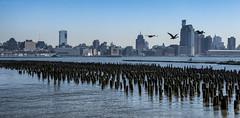 Hoboken Piers (PAJ880) Tags: hoboken nj new jersey hudson river piers abandoned industry skyline york manhattan nyc