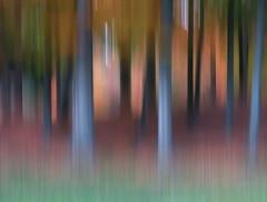 shades of autumn (B. jeweled) Tags: sliderssunday hss icm bjeweled