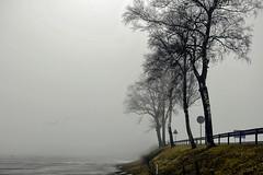 Trees at the bridge (algimantas_tirlikas) Tags: energy giedre kalendorius mix outdoor tree