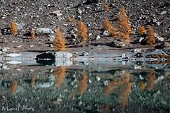 LagoBlu_Autunno (Marco Occhieppo) Tags: autonno valledaosta natura lagoblu lago lake autumn coloriautunnali landscape paesaggio lagoalpino montagna mountain riflessi reflexes ayas valledayas