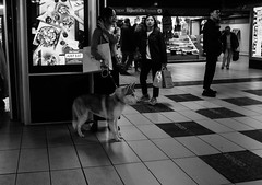 Dog in the subway (Daniele Salutari) Tags: photo photography shot wow amazing cool great good dannyboy ilovedannyboy daniele black white bianco nero milano milan italy city urban street people
