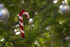Candy Cane Ornament (milepost430media.com) Tags: blankspace happiness hooked sparkle shiny redandwhite stripes stripped cane glass ornament hang tree christmas holiday trim home decoration lights pine evergreen winter frasier fir background pretty bright merry happy white green candycane red glitter 70d dslr