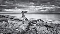 Broken (Stefan Sellmer) Tags: wood ostsee sunday balticcoast blk germany calmness drama bw kiel balticsea walk strande schleswigholstein deutschland de