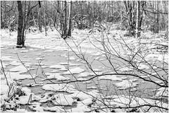 AMS Ekebysjns Naturreservat 161130 (_I_AM_) Tags: ekebysjn naatur vinter bw blackwhite winter intimatelandscape pond naturereserve sweden frozen frosty ice cold winterlandscape weed trees snowspots branches