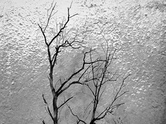 Cold (Rossdxvx) Tags: abstract art textured texture textures tree trees grim dark 2016 overlay overexposed outdoor outdoors grey blackandwhite creepy surreal surrealism silhouette experimental eerie