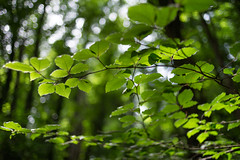foresta Umbra (*magma*) Tags: foresta umbra puglia gargano