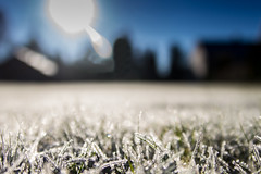 Fragilitieit (cardinaelsstijn) Tags: bevroren fragiliteit gras koud winter vorst canon tamron eos 600d f28 sunny sunday