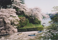 sakura, imperial palace (oceanerin) Tags: cherry tokyo blossoms sakura imperialpalace hanami tbt