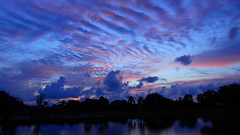 Red and Blue Sunset (Jim Mullhaupt) Tags: pictures camera pink blue sunset red wallpaper sky orange sun lake color reflection tree water weather silhouette yellow clouds landscape photography gold evening photo pond nikon flickr sundown florida dusk snapshot picture palm exotic p900 tropical coolpix bradenton endofday cloudsstormssunsetssunrises nikoncoolpixp900 coolpixp900 nikonp900 jimmullhaupt