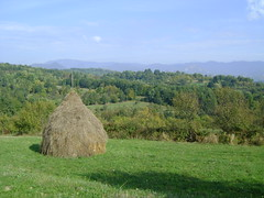 rapsodii de toamn (bseteanu) Tags: autumn fall rural landscape autumncolors romania toamna agriculture agricultura maramures peisaj dumbravita satulromanesc
