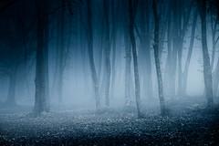walking into the woods (Luca-Anconetani) Tags: park autumn italy mist nature monochrome fog alberi woods italia raw shot ngc nebbia autunno atmosfera paesaggio sera bosco athmosphere sibillini regionemarche faggeta elcito parcomontisibillini lucaanconetani