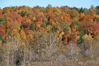 Fall color in central New York