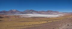 Salar de Talar (Ralph Green) Tags: chile panorama southamerica grass rocks desert saltlake andesmountains bunchgrass pajabrava reservanacionallosflamencos salardetalar