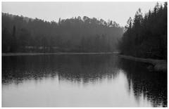 # (Nordic Aperture) Tags: trees shadow water rain skyline 50mm nikon grain delta 11 mindfulness 100 f2 waterdrops treeline ilford xtol nikkork