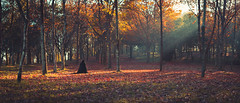 Ups and Downs (K.Ma) Tags: autumn light fog forest woods panoramic filter 219 godrays filteredlight cinematographic godray