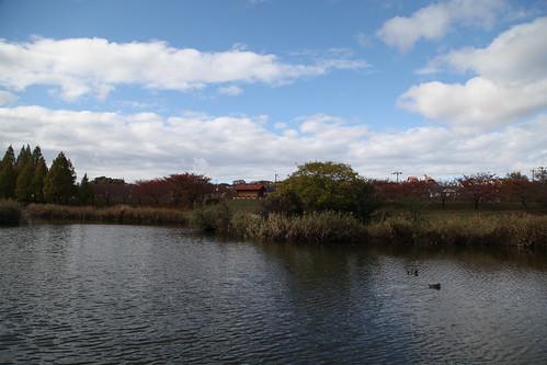 水鳥が泳いでいます