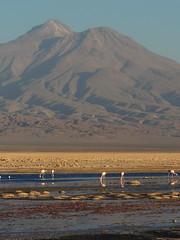 Volcn Tumisa y Laguna Chaxa (Mono Andes) Tags: chile volcano andes salar flamencos altiplano salardeatacama volcn volcanoe punadeatacama reservanacionallosflamencos volcntumisa