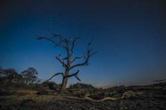 DSC_2881_1 (bullettniko) Tags: longexposure trees stars raw moonlight 14mm covehithe beachphotos nikon1424mm