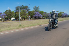 IMGP9329-e (anjin-san) Tags: southafrica spring italian ride pentax donald motorbike riding motorcycle jacaranda ducati pretoria ontheroad waverley gauteng dollshouse jacarandas 2015 transvaal hypermotard csir mx1 massyn donaldmassyn lynnwoodmanor meiringnauderoad pentaxmx1